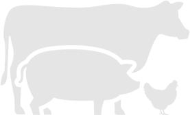 Vlees bereiding